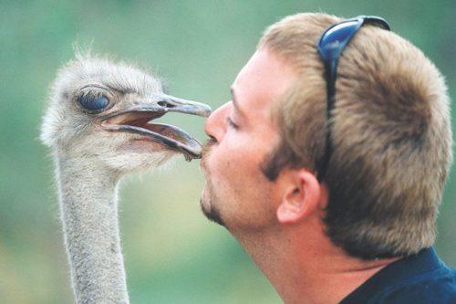 Cango Ostrich Farm Oudtshoorn