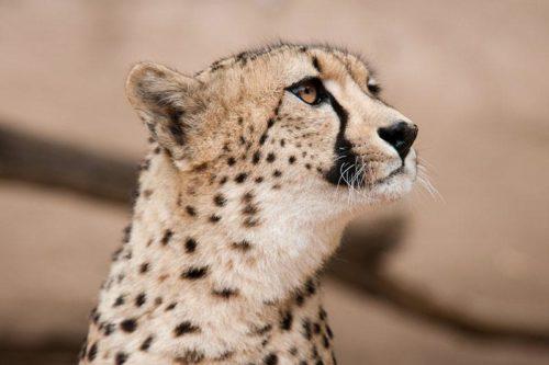 Cango Wildlife Ranch Oudtshoorn
