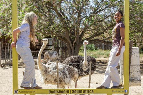 Safari Ostrich Show Farm Oudtshoorn
