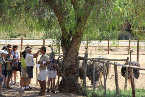 Highgate Ostrich Show Farm Oudtshoorn