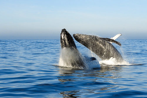 Whale watching in Knysna