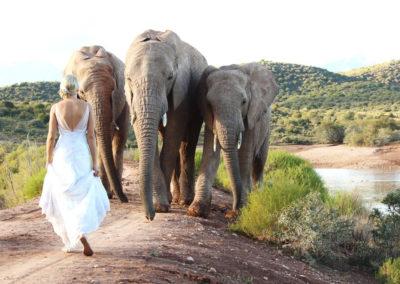 Buffelsdrift Game Lodge Wedding - Bride with Elephants